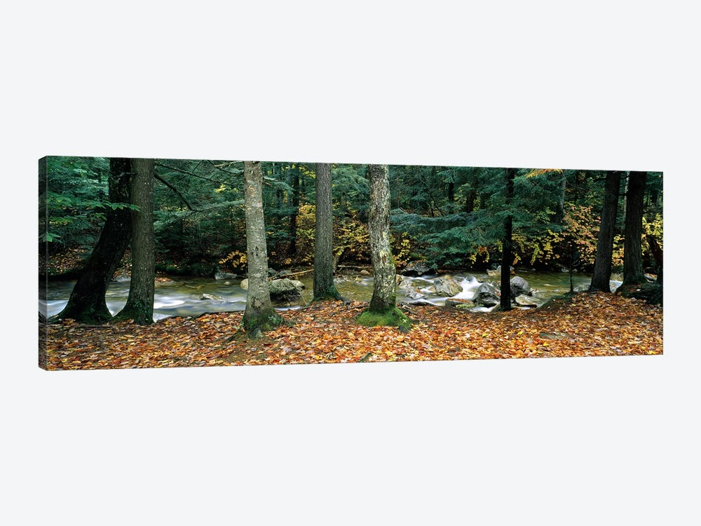 River flowing through a forest, White Mountain National Forest, New Hampshire, USA by Panoramic Images 1-piece Canvas Artwork