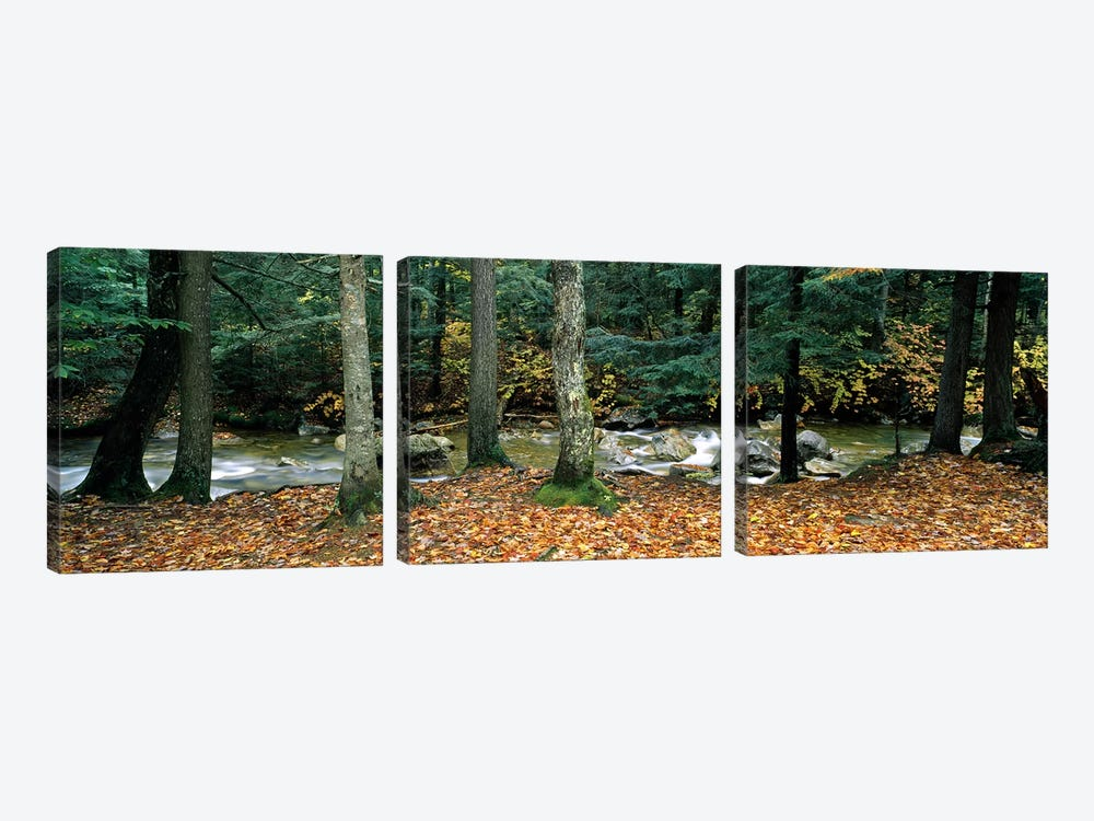 River flowing through a forest, White Mountain National Forest, New Hampshire, USA by Panoramic Images 3-piece Canvas Artwork