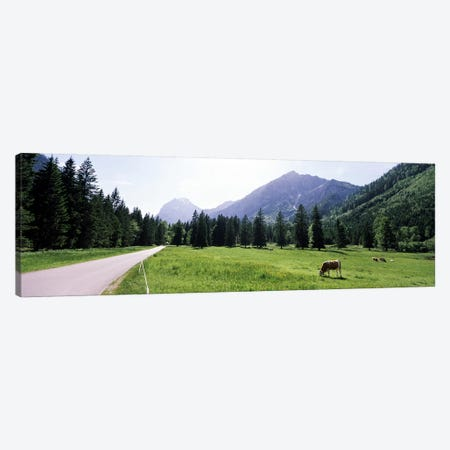 Cows grazing in a field, Karwendel Mountains, Risstal Valley, Hinterriss, Tyrol, Austria Canvas Print #PIM8831} by Panoramic Images Canvas Wall Art