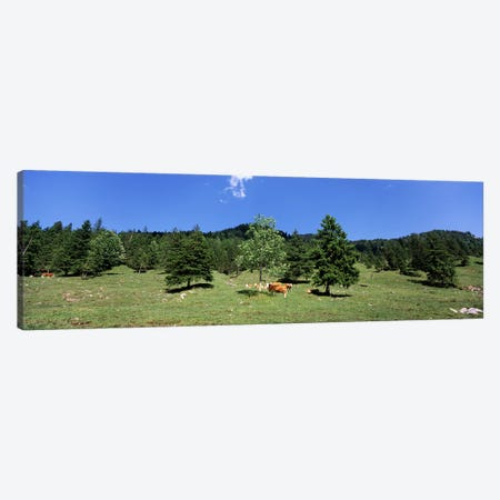 Herd of cows grazing in a field, Karwendel Mountains, Risstal Valley, Hinterriss, Tyrol, Austria Canvas Print #PIM8832} by Panoramic Images Canvas Artwork