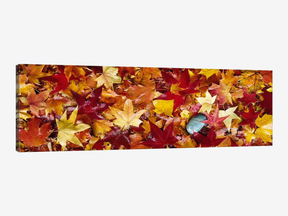 Maple leaves by Panoramic Images 1-piece Art Print