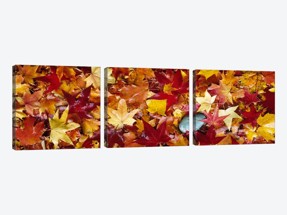 Maple leaves by Panoramic Images 3-piece Art Print