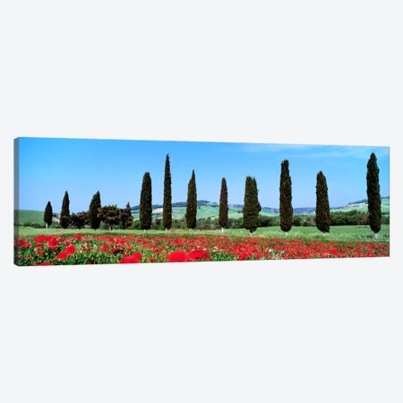 Countryside Landscape, Tuscany, Italy Canvas Print #PIM888} by Panoramic Images Canvas Artwork