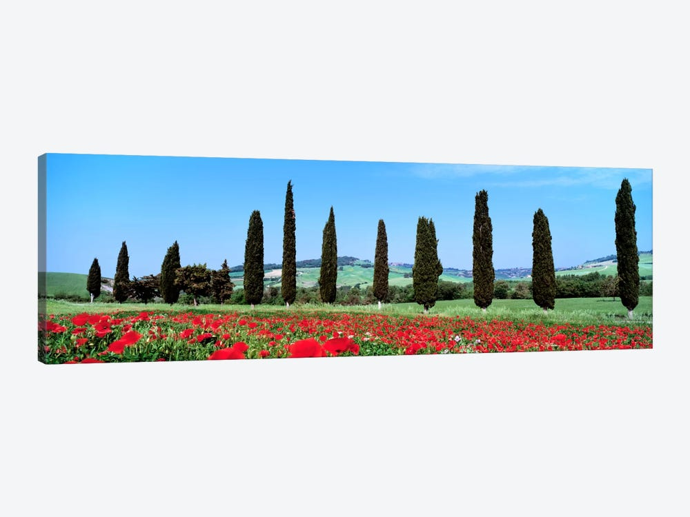 Countryside Landscape, Tuscany, Italy by Panoramic Images 1-piece Canvas Art Print