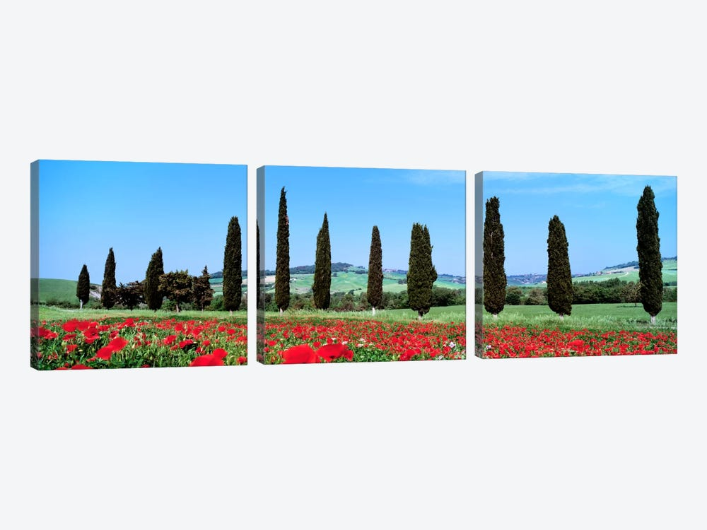 Countryside Landscape, Tuscany, Italy by Panoramic Images 3-piece Art Print