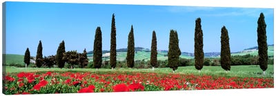 Countryside Landscape, Tuscany, Italy Canvas Art Print