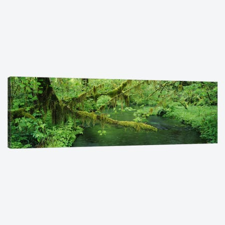 Understorey Landscape, Hoh Rainforest, Olympic National Park, Washington, USA Canvas Print #PIM8968} by Panoramic Images Canvas Artwork