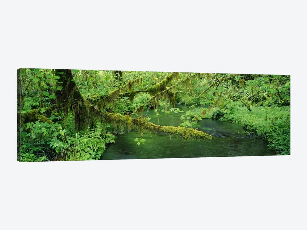 Understorey Landscape, Hoh Rainforest, Olympic National Park, Washington, USA by Panoramic Images 1-piece Art Print
