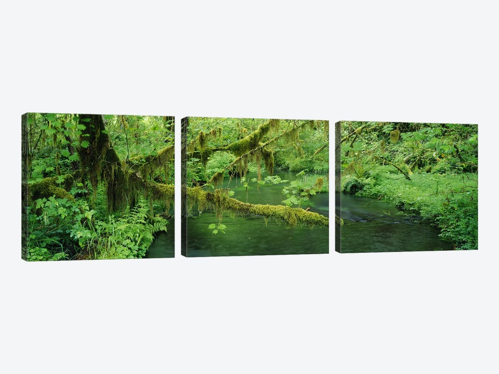 Understorey Landscape, Hoh Rainforest, Olympic National Park, Washington, USA by Panoramic Images 3-piece Art Print