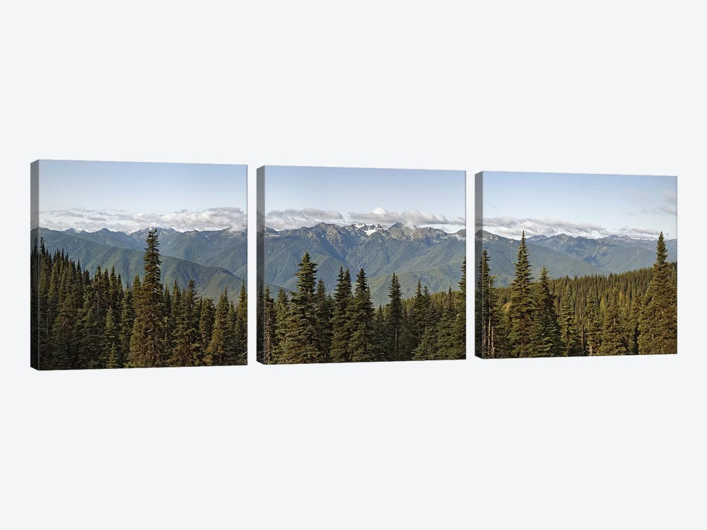 Mountain range, Olympic Mountains, Hurricane Ridge, Olympic National Park, Washington State, USA by Panoramic Images 3-piece Canvas Art
