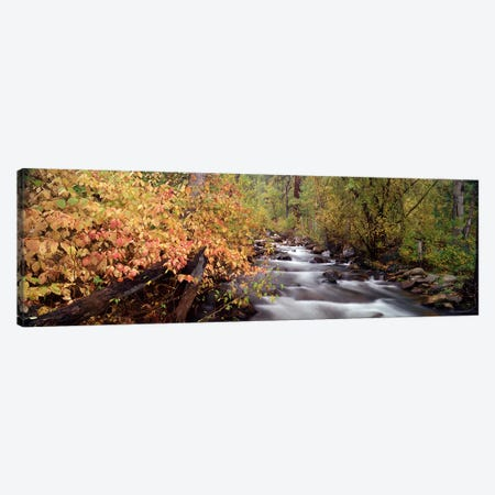 Stream flowing through a forest Canvas Print #PIM9031} by Panoramic Images Canvas Art Print