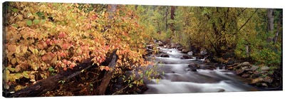 Stream flowing through a forest Canvas Art Print
