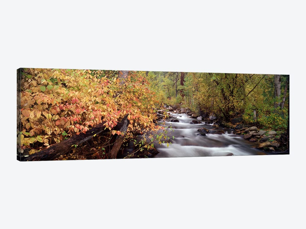 Stream flowing through a forest by Panoramic Images 1-piece Art Print