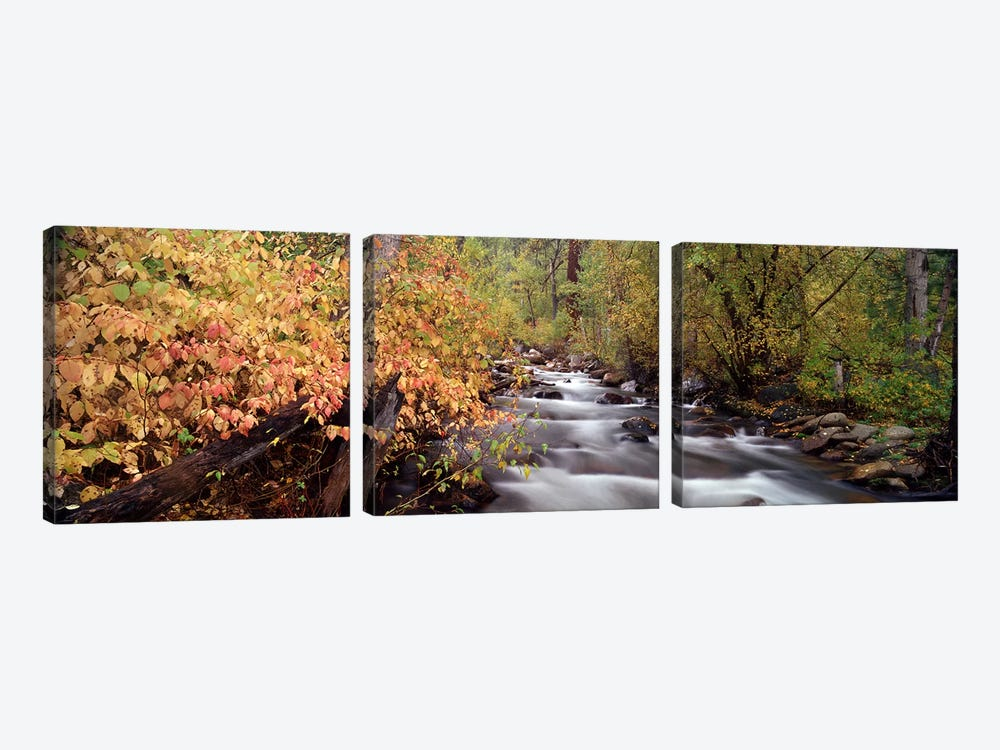 Stream flowing through a forest by Panoramic Images 3-piece Canvas Art Print