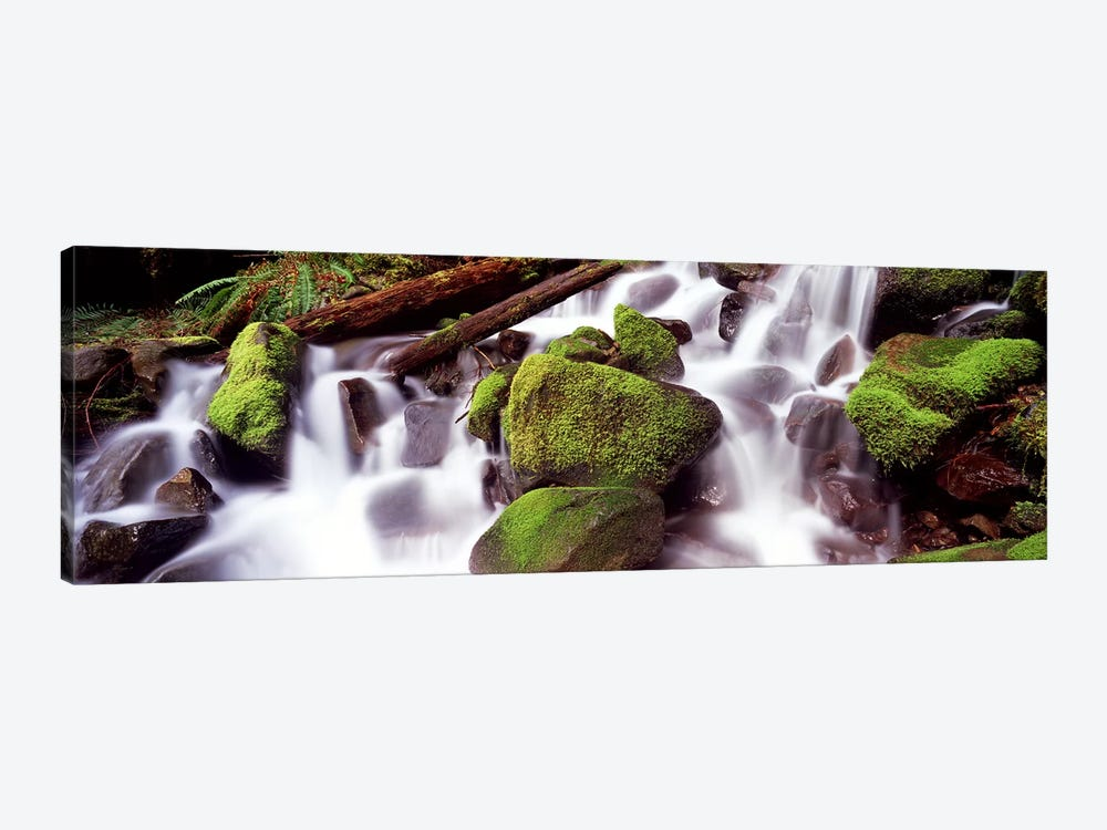 Cascading waterfall in a rainforestOlympic National Park, Washington State, USA by Panoramic Images 1-piece Canvas Artwork
