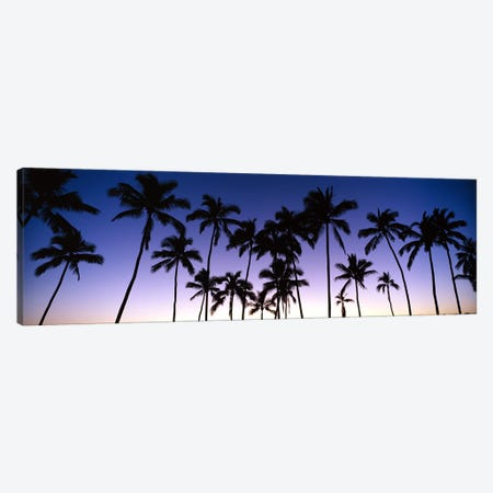 Silhouettes of palm trees at sunset Canvas Print #PIM9051} by Panoramic Images Art Print