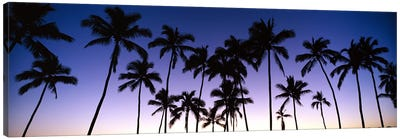 Silhouettes of palm trees at sunset Canvas Print #PIM9051
