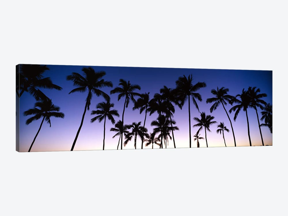 Silhouettes of palm trees at sunset by Panoramic Images 1-piece Art Print