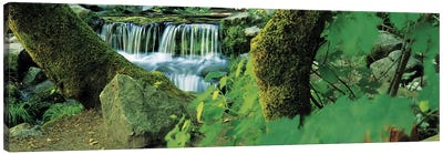 Waterfall in a forest Canvas Art Print