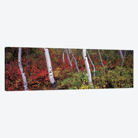 Trees in a forest Canvas Print #PIM9072} by Panoramic Images Canvas Print