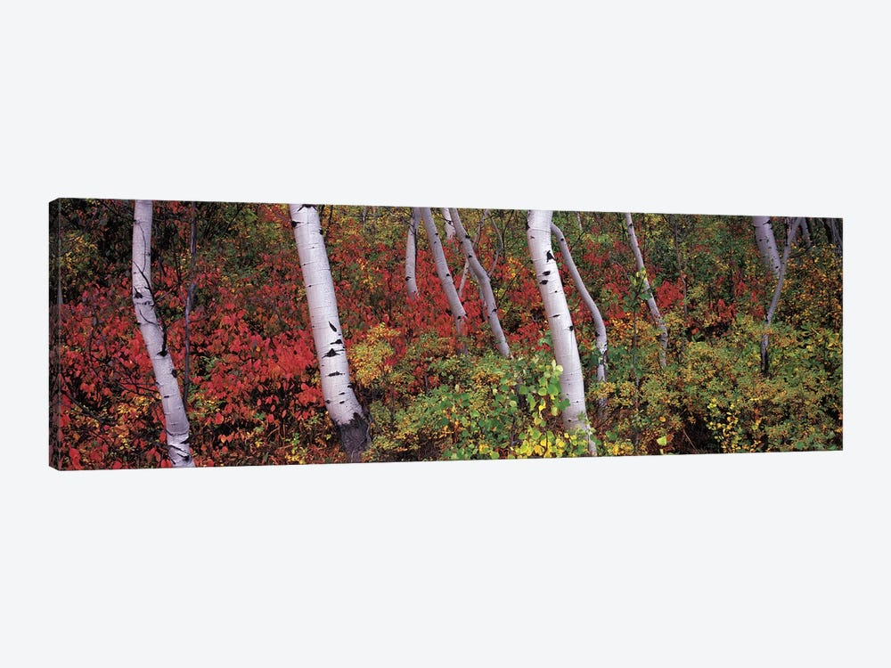 Trees in a forest by Panoramic Images 1-piece Canvas Art