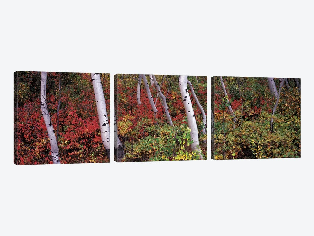 Trees in a forest by Panoramic Images 3-piece Canvas Art
