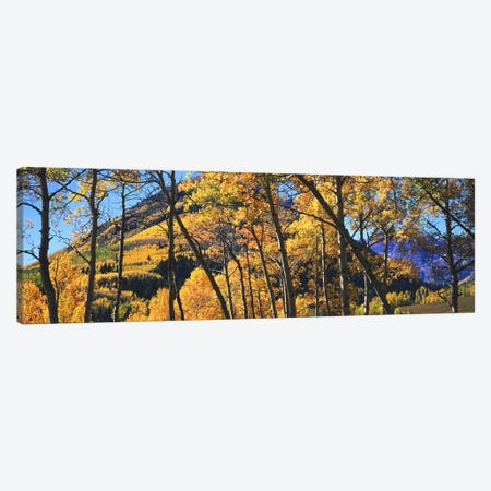 Aspen trees in autumn with mountain in the background, Maroon Bells, Elk Mountains, Pitkin County, Colorado, USA Canvas Print #PIM9093} by Panoramic Images Art Print