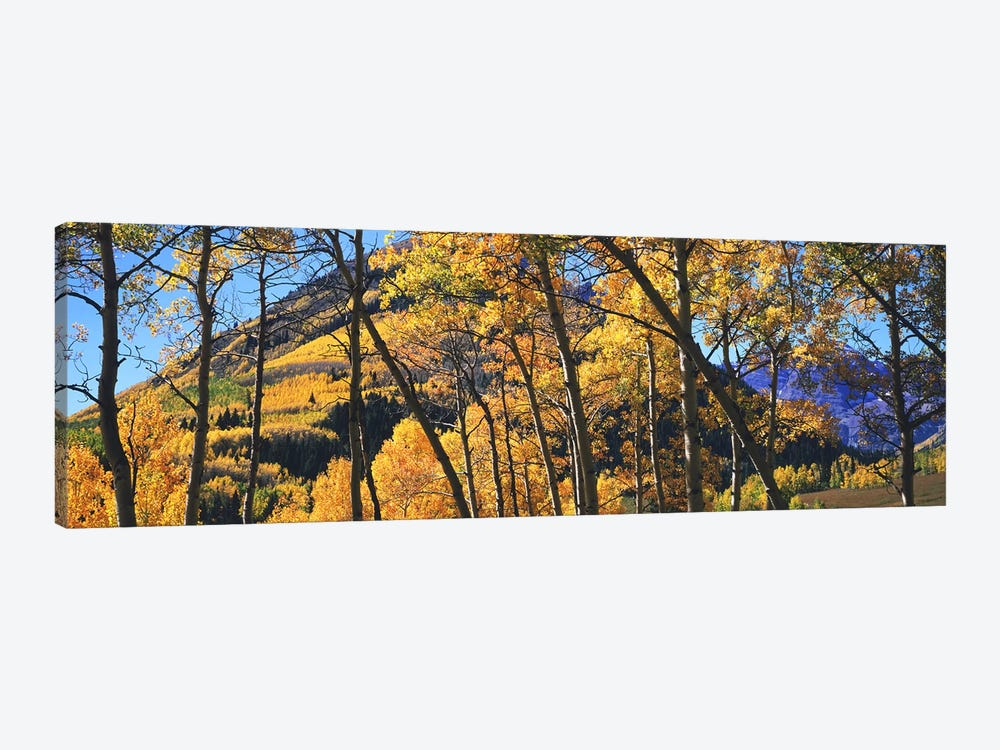 Aspen trees in autumn with mountain in the background, Maroon Bells, Elk Mountains, Pitkin County, Colorado, USA by Panoramic Images 1-piece Canvas Art Print