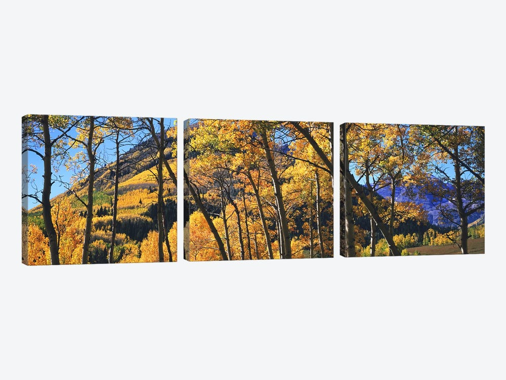 Aspen trees in autumn with mountain in the background, Maroon Bells, Elk Mountains, Pitkin County, Colorado, USA by Panoramic Images 3-piece Canvas Art Print