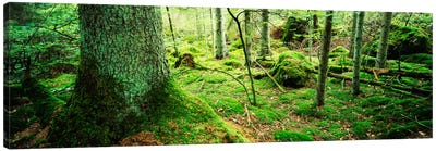 Close-up of moss on a tree trunk in the forest, Siggeboda, Smaland, Sweden Canvas Print #PIM909