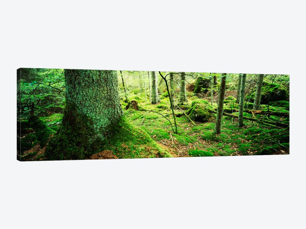 Close-up of moss on a tree trunk in the forest, Siggeboda, Smaland, Sweden by Panoramic Images 1-piece Art Print