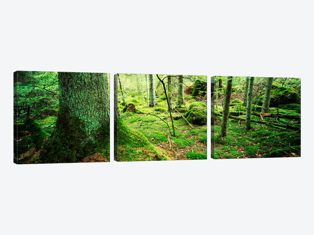 Close-up of moss on a tree trunk in the forest, Siggeboda, Smaland, Sweden by Panoramic Images 3-piece Art Print
