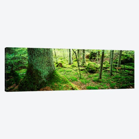 Close-up of moss on a tree trunk in the forest, Siggeboda, Smaland, Sweden Canvas Print #PIM909} by Panoramic Images Art Print