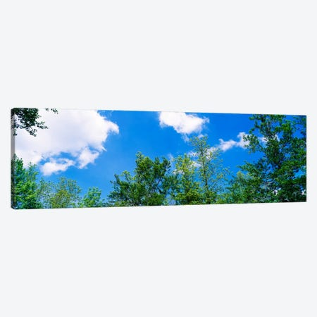 Low angle view of trees Canvas Print #PIM910} by Panoramic Images Canvas Art