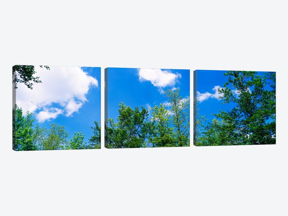 Low angle view of trees 3-piece Canvas Art Print