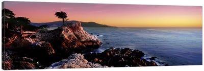 Silhouette of Lone Cypress Tree at a coast17-Mile Drive, Carmel, Monterey County, California, USA Canvas Print #PIM9121
