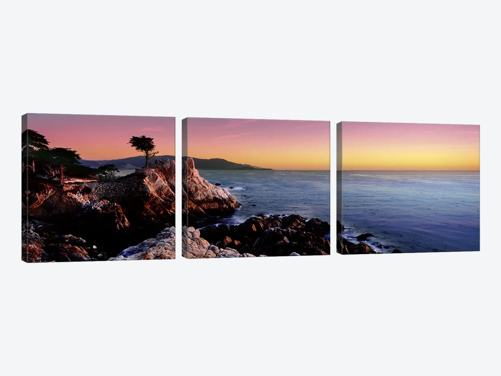 Silhouette of Lone Cypress Tree at a coast17-Mile Drive, Carmel, Monterey County, California, USA by Panoramic Images 3-piece Canvas Art Print