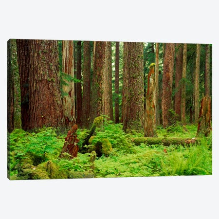 Forest floor Olympic National Park WA USA Canvas Print #PIM912} by Panoramic Images Canvas Wall Art