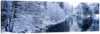 Snow covered trees along a river, Yosemite National Park, California, USA #2 Canvas Art Print