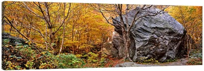 Big boulder in a forest, Stowe, Lamoille County, Vermont, USA Canvas Art Print