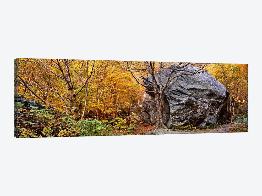 Big boulder in a forest, Stowe, Lamoille County, Vermont, USA by Panoramic Images 1-piece Canvas Art Print