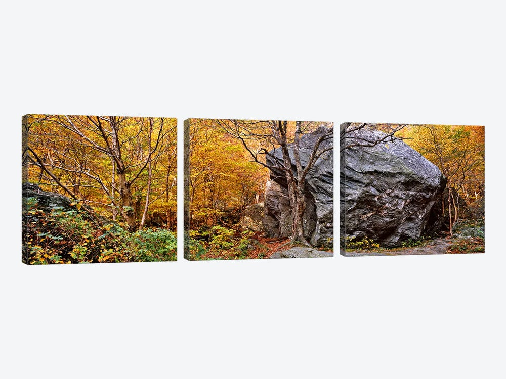 Big boulder in a forest, Stowe, Lamoille County, Vermont, USA 3-piece Canvas Art Print