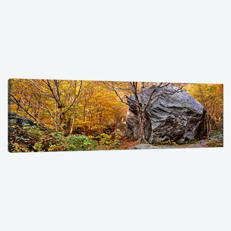 Big boulder in a forest, Stowe, Lamoille County, Vermont, USA Canvas Print #PIM9132} by Panoramic Images Canvas Wall Art