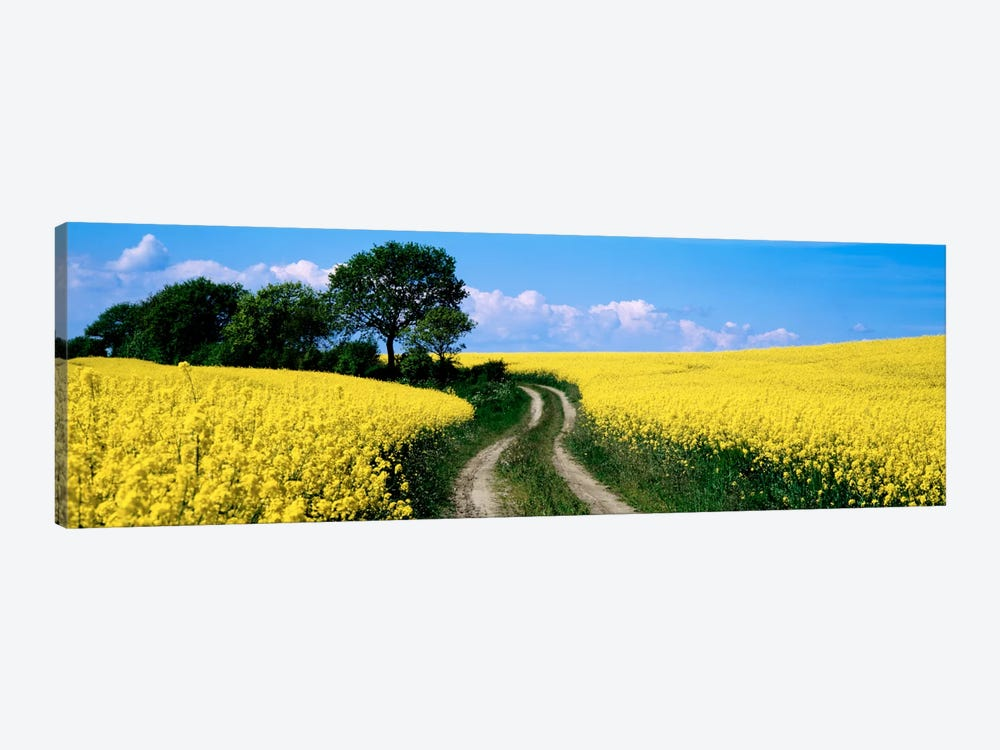 Rapaseed Field, Germany by Panoramic Images 1-piece Canvas Wall Art