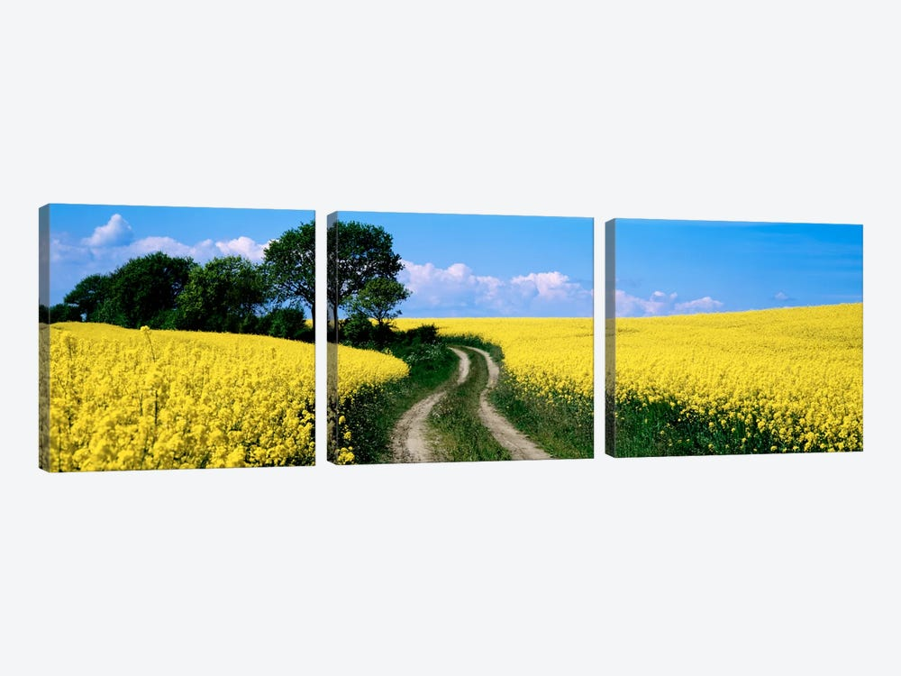 Rapaseed Field, Germany by Panoramic Images 3-piece Canvas Artwork