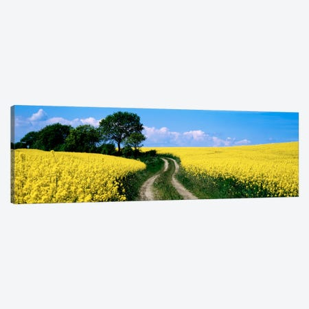 Rapaseed Field, Germany Canvas Print #PIM915} by Panoramic Images Canvas Print