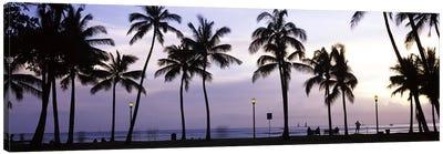Palm trees on the beach, Waikiki, Honolulu, Oahu, Hawaii, USA Canvas Art Print