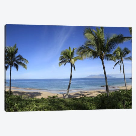 Palm Tree Lined Beach, Maui, Hawaii, USA Canvas Print #PIM9262} by Panoramic Images Canvas Wall Art