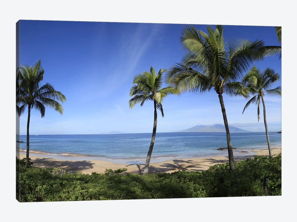 Palm Tree Lined Beach, Maui, Hawaii, USA by Panoramic Images 1-piece Canvas Artwork