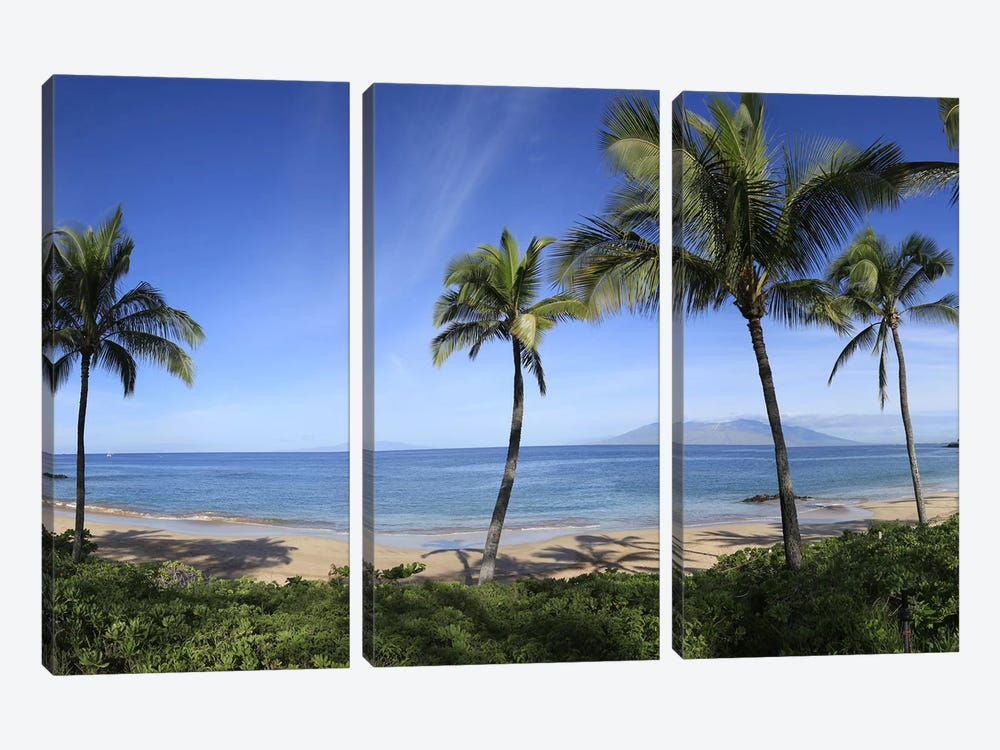 Palm Tree Lined Beach, Maui, Hawaii, USA by Panoramic Images 3-piece Canvas Art